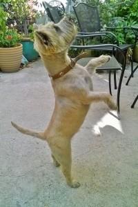 Cooler weather, let's dance!!!