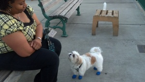 Blue Suede Shoes in Memphis?