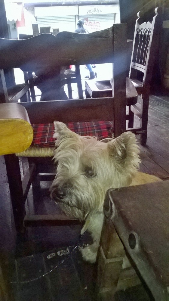 The Chronicles of Hamish, Mexico (4/6)