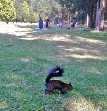 Black squirrels. A first for Hamish... and us.
